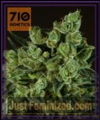 710 Genetics Old White Widow Feminised Cannabis Seeds